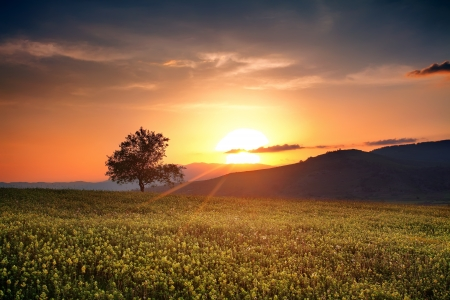 colorful sunrise: bulgarian sumer HDR sunset with single calm tree over the yellow field Stock Photo