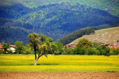 pastoral: pastoral summer landscape near bulgarian village