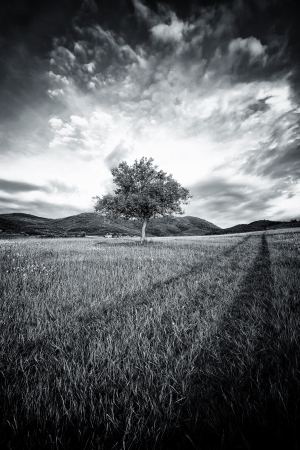abstract black and white spooky tree with high contrasted dramatic sky Stock Photo - 13894282