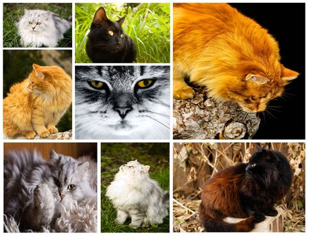 collage from several cat image for animal background  photo