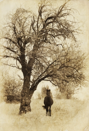 vertical spooky landscape with black horse and creepy tree Stock Photo - 15678731