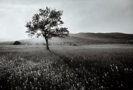bomen zwart wit: abstracte zwart-wit landschap met eenzame boom