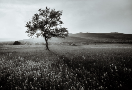 abstrakcyjny czarny i biały krajobraz z samotnym drzewem