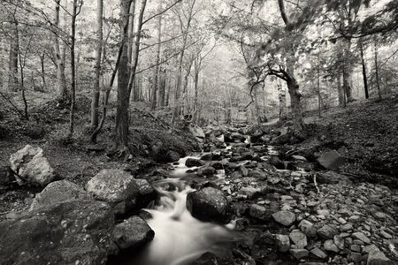 beautiful black and white bulgarian nature photo