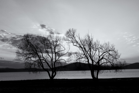 abstract tree silhouettes in black and white