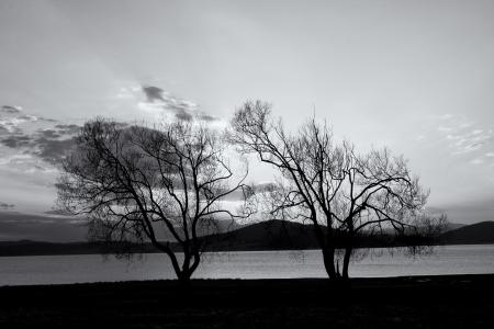 streszczenie sylwetki drzew w czerni i bieli