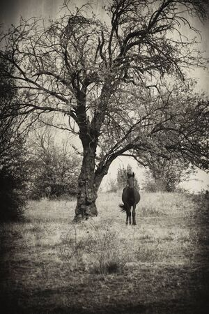 aged abstract spooky landscape with black horse Stock Photo - 15967950