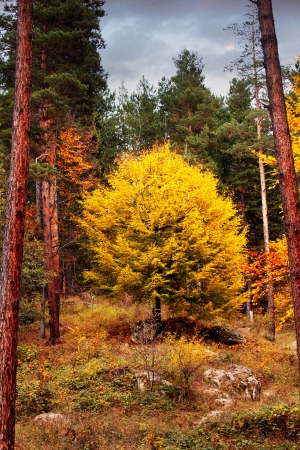 clody: clody forest autumn HDR landscape with golden tree