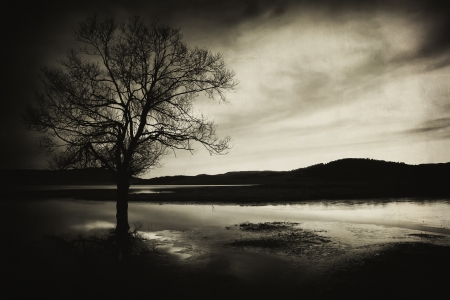 abstract vintage old picture with alone tree silhouette