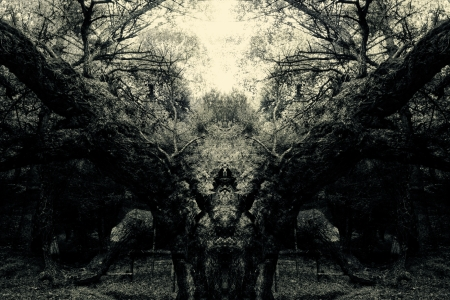 abstract vintage spooky forest background photo