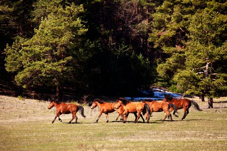 few wild horses in move photo