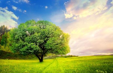 분명 녹색과 파란색 자연 landscape-의 HDR 기법에서 혼자 트리
