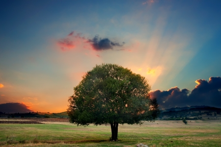peaceful: alone tree in sunset- HDR dramatic nature landscape Stock Photo