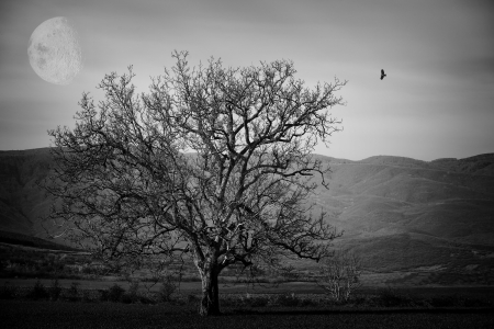 abstract spooky black and white landscape with alone tree and black bird- elements of this image furnished by  photo
