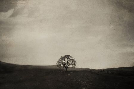 bleached: vintage old picture with alone tree