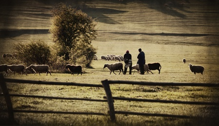 abstract vintage european farmland with goat and shipper