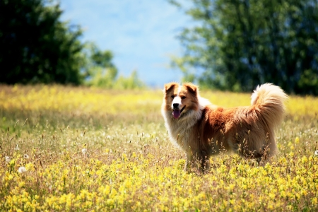 young cute dog in summer yellow field