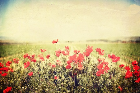 panoramic vntage landscape with red flower in spring field photo