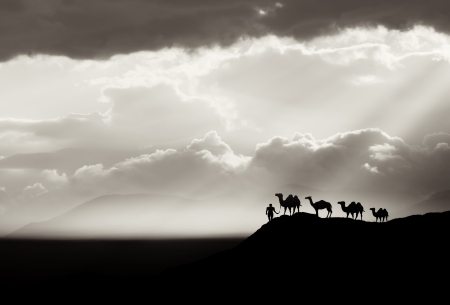 abstract black and white desert background with camel sillhouette