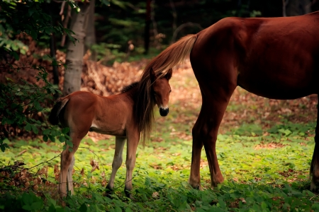synchronously: baby horse and his mother in sunny forest