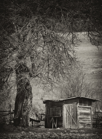 vintage spooky background with old creepy tree and wooden house  photo