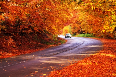 red autumn sunny road with blured car in deep bulgarian forest  Stockfoto