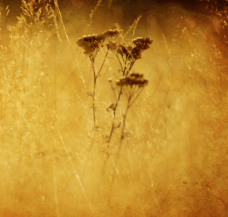 textured nature details background in square format photo