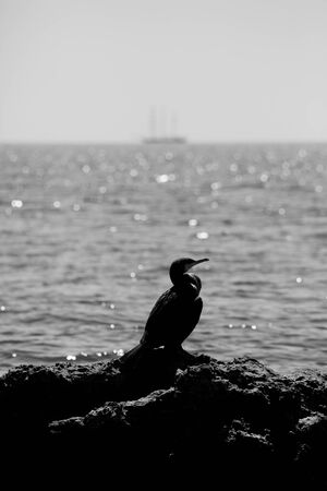 horison: verical black and white seascape with bird in the rocks and boat on horison  Stock Photo