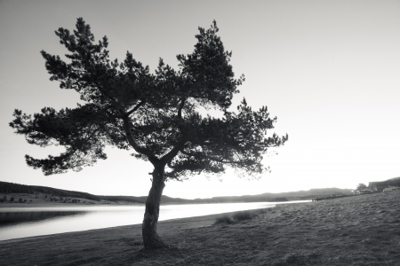 black and white landscape with lonely tree
