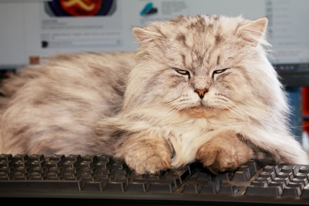 cute young cat lying on computer keyboard
