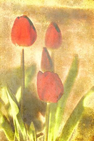 vintage textured red spring flowers in vertical landscape  photo