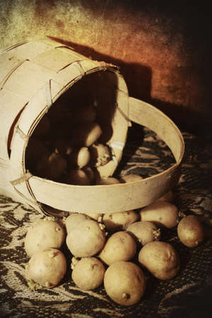 vintage potatoes for seeds- abstract old agricultural concept photo