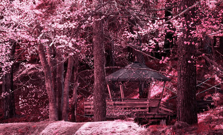 infra red: Beautiful infra red landscape in deep autumn forest  Stock Photo