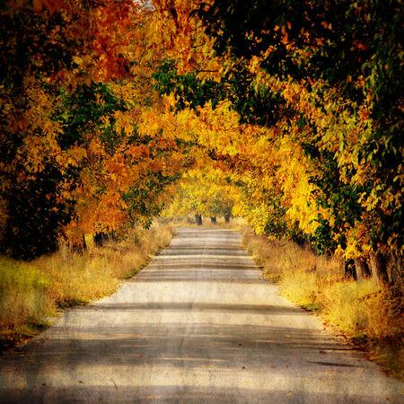 autumn forest: Foto d'epoca di bosco in autunno e strada di campagna