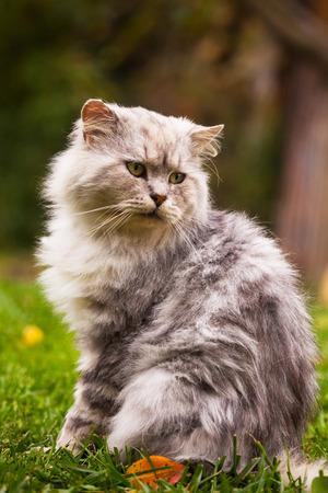 stared: white cute cat posing in autumn garden