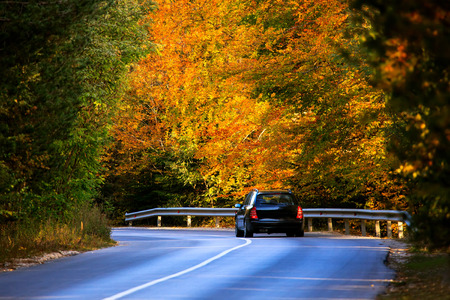 colorful autumn mountain road in bulgarian forest