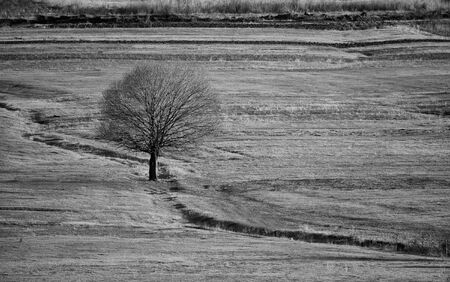 contrasted: high contrasted black and white meadows landscape with single tree and abstract nature lines