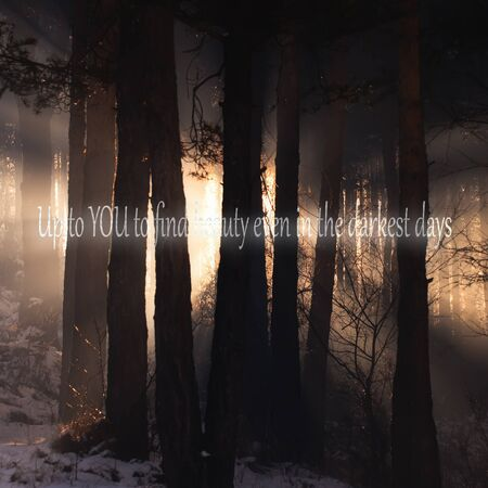 unknown: unknown inspirational quote background with dark woods in background Stock Photo