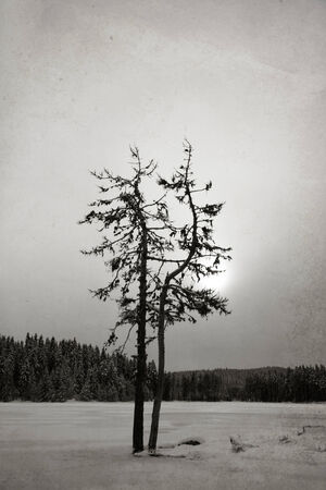 processed: abstract black and white textured vintage winter tree