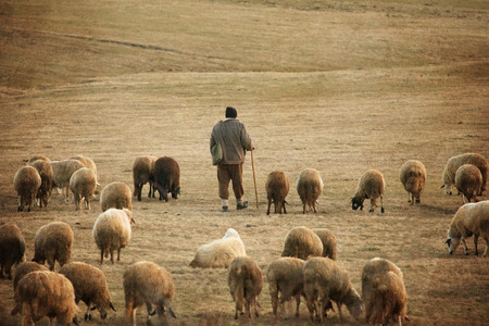 old vintage pastoral landscape with herd of sheep and his sheeperd near bulgarian small village
