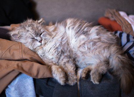 grumpy: grumpy cat sleep on messy couch