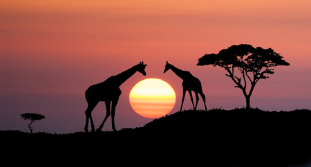 horison: Giraffes and africans tree at sunset, abstract african illustration landscape with big sun over the horison