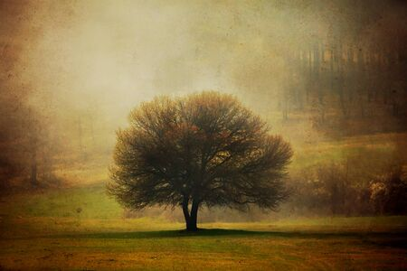 pastoral: grunge background with one tree in pastoral autumn meadows Stock Photo