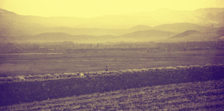 old vintage textured and filtered pastoral landscape with herd of sheep and his shepard near bulgarian small village
