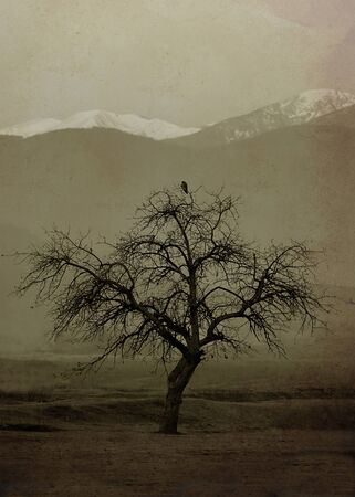 alone bird: vertical vintage textured landscape with alone tree and bird on the top- some noice added for stronger vintage effect Stock Photo
