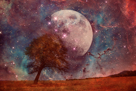 red alien landscape with alone tree over the moon night sky-