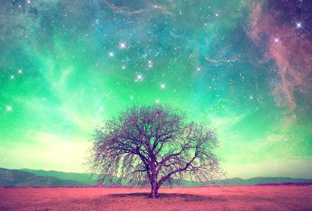 m�gica: paisaje extranjero rojo con solo �rbol sobre el cielo de la noche con muchas estrellas - Foto de archivo