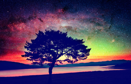 alien landscape with alone tree over the night sky with many stars - elements of this image are furnished