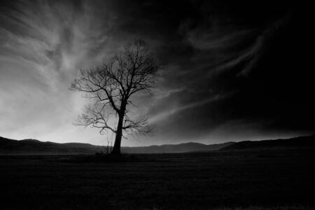 alone in the dark: abstract black and white high contrasted low key horror landscape with alone spooky tree