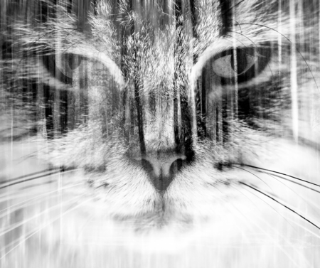 black cat silhouette: abstract double exposure cat and woods portrait
